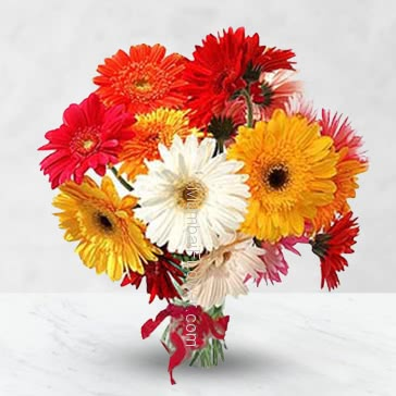 Bunch of 15 Mixed Gerberas nicely decorated with Ribbons.