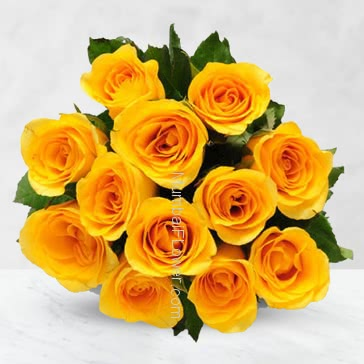 Bunch of 12 Yellow Roses with Plastic Cellophane packing