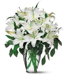 Beautiful Bunch of 10 Stems of White Lilies nicely decorated with greens and Ribbons. <br>Note : Vase is not included.