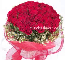Bunch of 50 Valentines Day Red Roses to impress your loved once with nicely decorated with Ribbons.