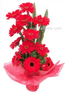 Present this Arrangement of 15 Red Gerberas to who is the special one in your life..