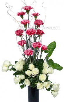 With the purity of your heart for your innocent beautiful love with Clear Glass Vase with 12 Pink Carnations and 20 white Roses.