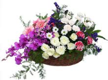 Nicely arrange Basket with Purple Orchids, pink and white Carnations, Roses and fillers for your suitable occasion.