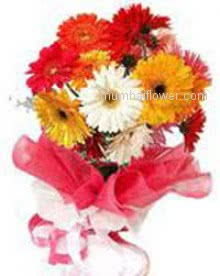 Send beautiful and blossom multi desire flowers Bunch of 20 Mixed Gerberas nicely decorated with Ribbons.