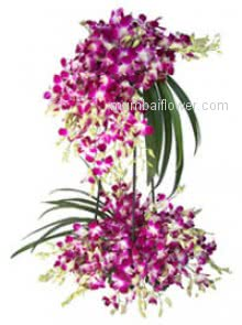 A Beautiful tall Arrangement of 60 Orchid with grace and elegance for your special one.
