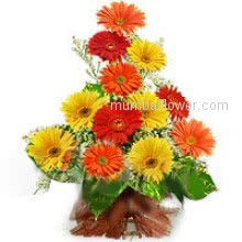 Brings the colors in reciepients life  by recieving this beautiful colorful Bouquet of 15 Mixed Gerberas