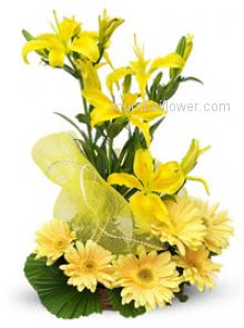 Arrangement of 4 Yellow Lilies and 10 Yellow Gerberas wonderfully decorated with net and leaves are the best for your best friend