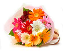 Bunch of 12 Mixed Gerberas nicely decorated with fillers and ribbons