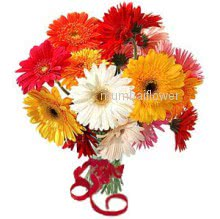 Bunch of 10 Mixed Colored Gerberas nicely decorated with fillers and ribbon