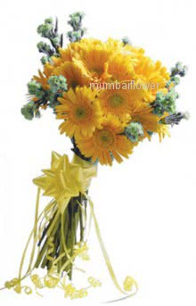 Bunch of 12 Yellow gerberas nicely decorated with fillers and ribbons