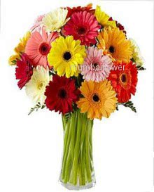 Bunch of 20 Mixed colored gerberas nicely decorated with ribbons