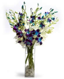 Glass vase with 10 Blue Orchids nicely decorated with greens.. Please note this item not available all the time