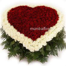 Heart shape Arrangement of 150 Red and White Roses nicely decorated with fillers and greens