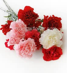 Hand Bunch of 12 Mixed Color Carnations with fillers ribbons and ribbons