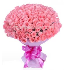 Hand Bouquet of 100 Pink Roses with fillers ribbons and Color Paper Packing